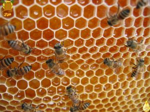 بيوت النحل